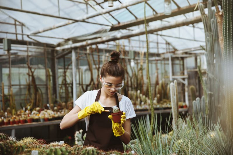 Plants for Texas Retailer -Concentrated young woman standing in greenhouse near plants